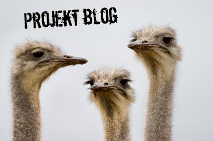 projekt blog